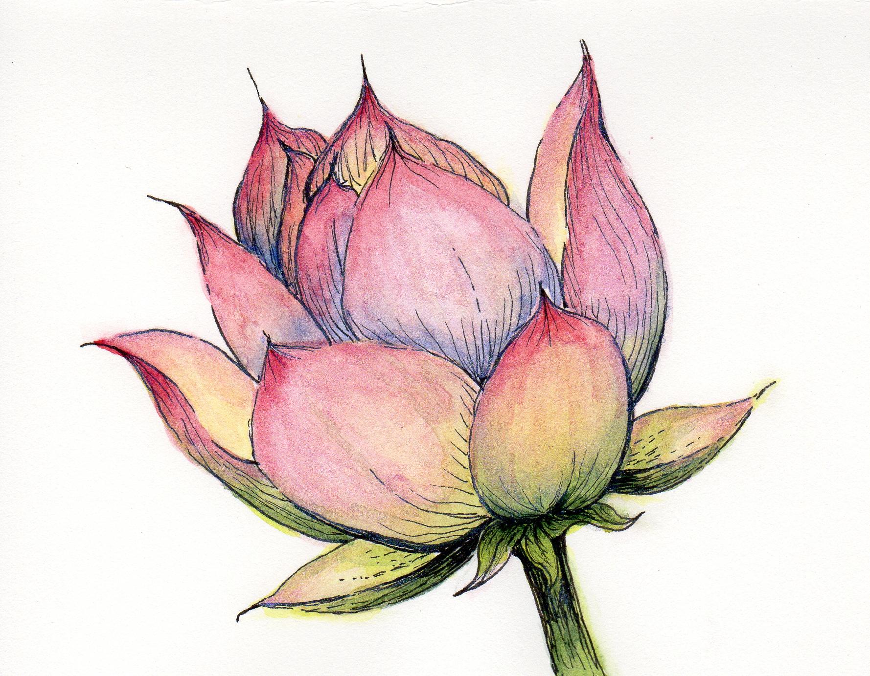 Pink Lotus Art by Liz Oertel
