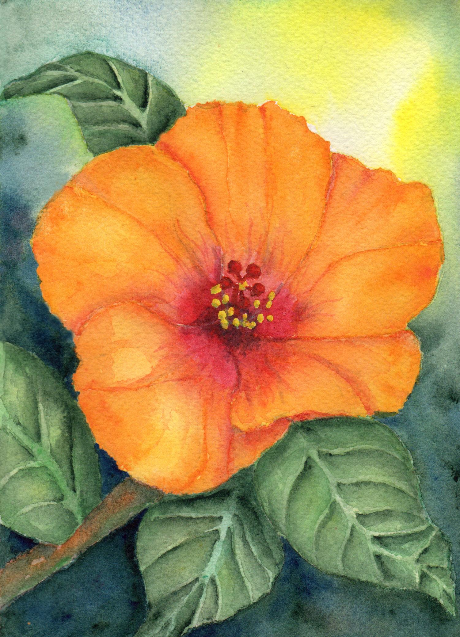 Orange Hibiscus by Elizabeth Oertel