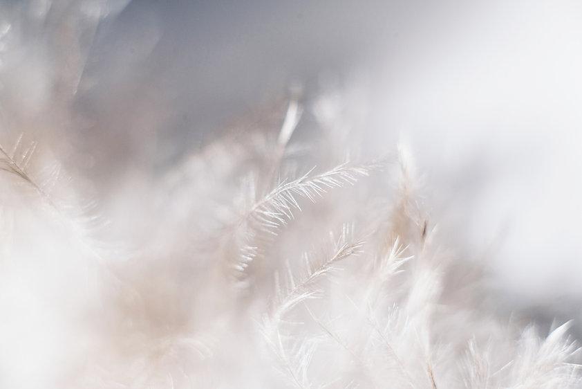 Белые растения