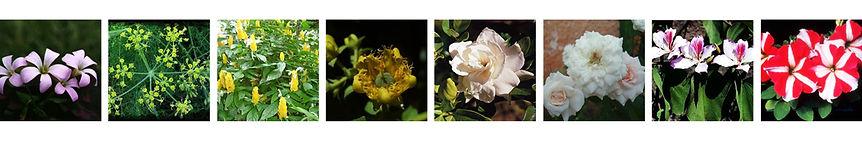 barra de flores 2