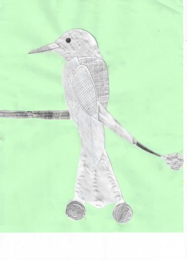 6d A. Ella_Gepunktete_Münzparadisvogel