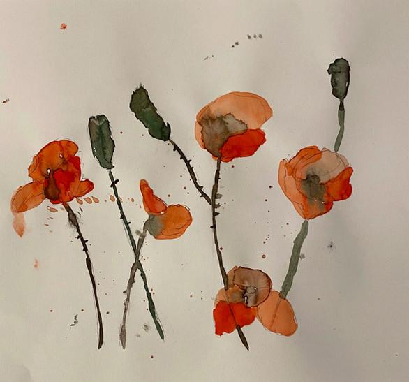 Mohnblumen von Felix M.