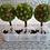 Thumbnail: Citrus Orchard
