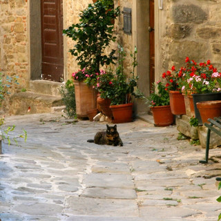 Cats and potted plants