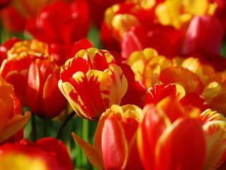 Erwachen im Frühling
