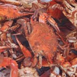 crabs.