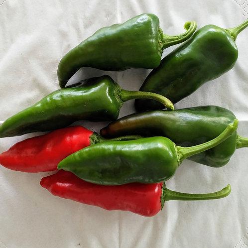 Chili-Samen Pimientos de Padron - Schärfegrad 4