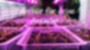 Heizmatten Pflanzenlampen Stecklingskast
