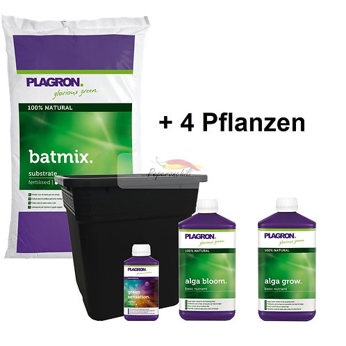 Chili-Set medium, 4 Pflanzen mit Plagron 100% Natural
