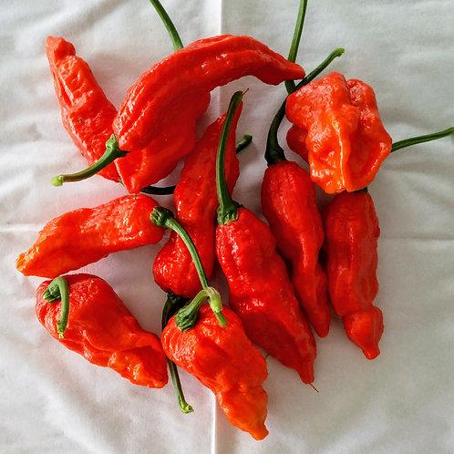 Chili-Samen Naga Bhut Jolokia - Schärfegrad 10+