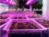 Chili Pflanzen Anzucht_Peperonchili Schw