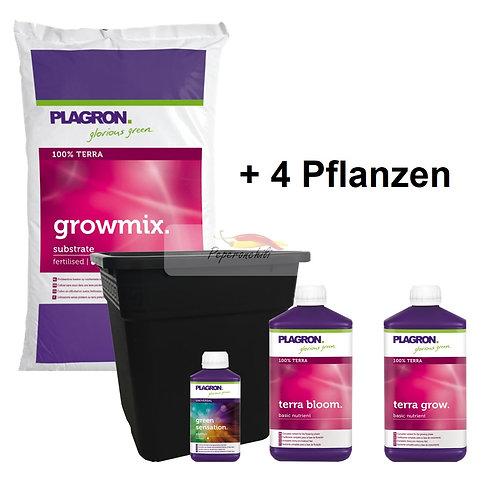 Chili-Set medium, 4 Pflanzen mit Plagron 100% Terra