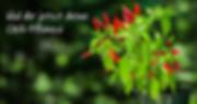 Chili Pflanzen kaufen Peperonchili.jpg.p