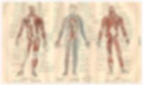 ostéopathe muzillac