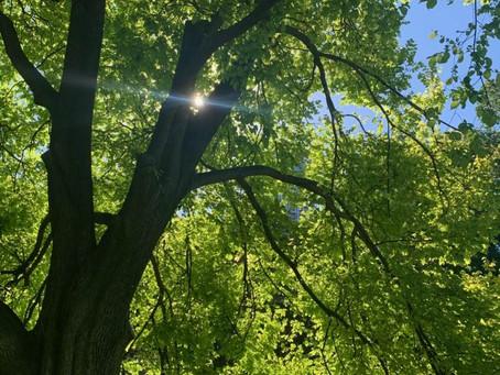 Tree report post Solstice