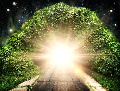 portal tree.jpg