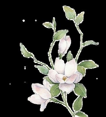 kisspng-jasmine-mo-li-hua-white-flowers-