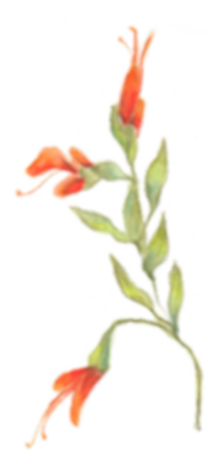 WR Flower B.png
