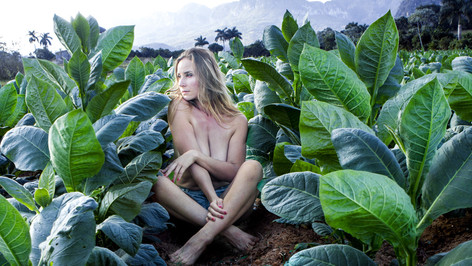 Cuba Tobacco Fields - Vassanta (2016)