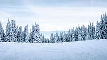 snow_winter_trees_136654_3840x2160.jpg