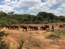 Art Not Ivory DSWT Safari