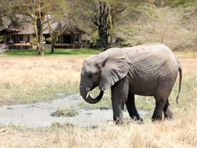 Art (Not Ivory) In Africa Safari