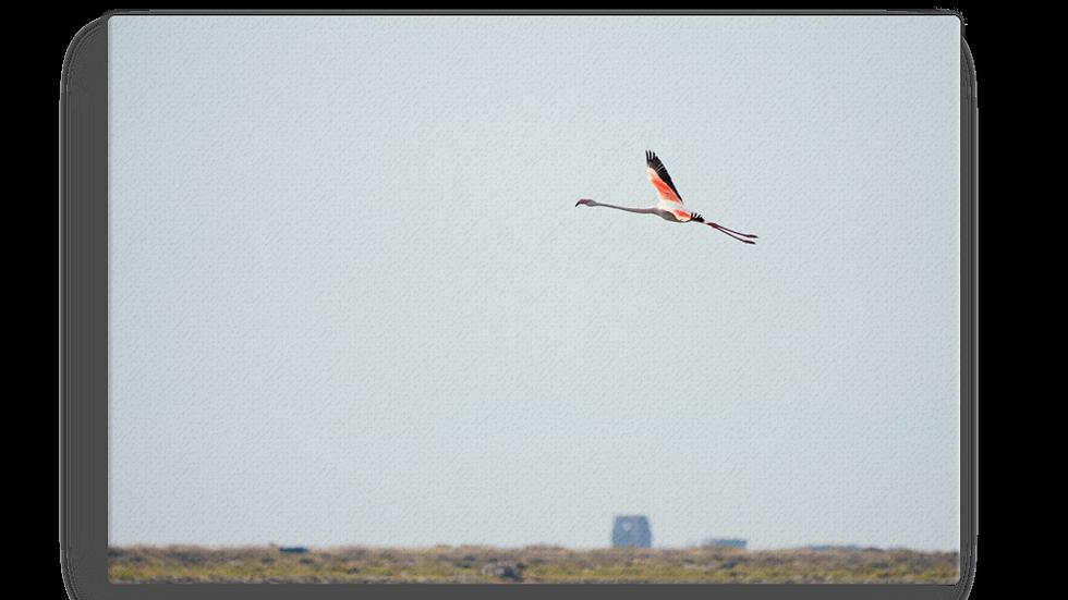 Leinwand Flamingo