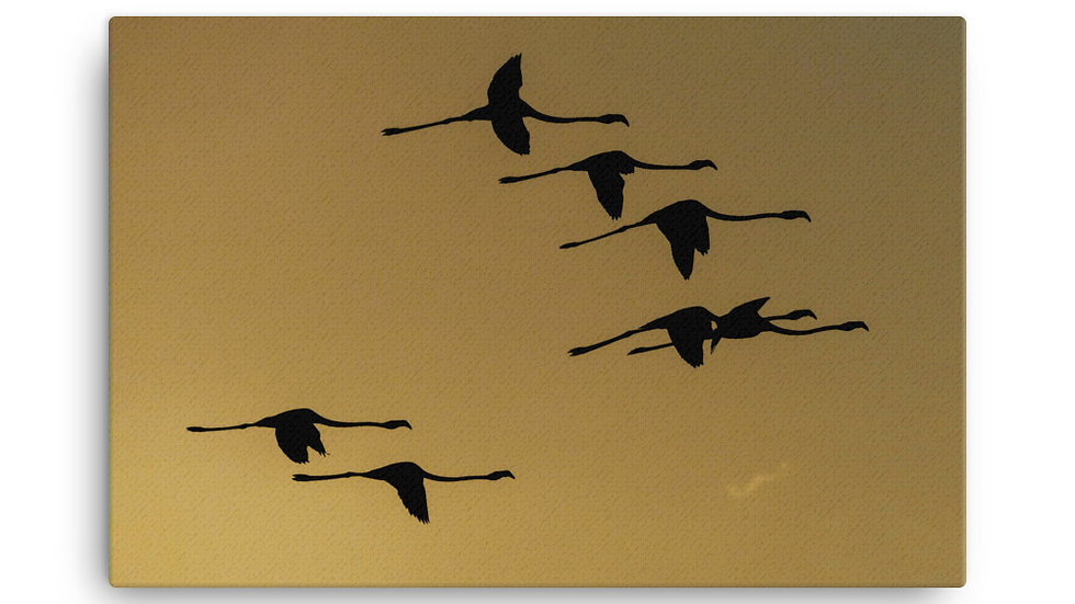 Leinwand Flamingoflug