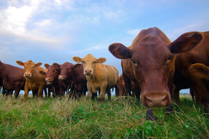 Don't have a regular cow! Celebrate a diverse Independence Day diet with a Greener BBQ.