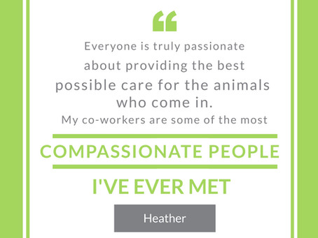 CSS Appreciation Week - Meet Heather!