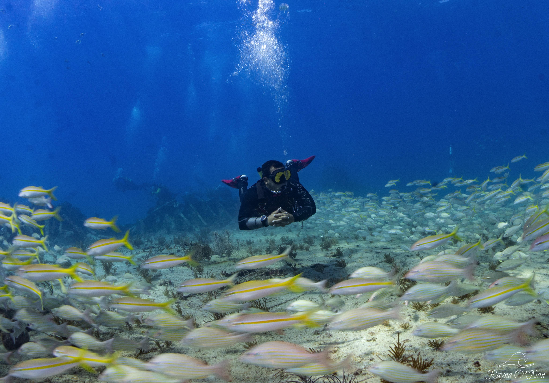 Monkey Diver