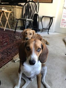 Wolffe Puppy Training