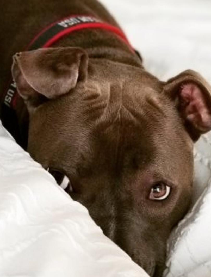 Regal Pet Services, LLC