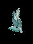light leaf 6.png