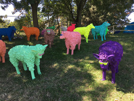 Pop Sheep, 2016