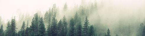 arvores-enevoado-floresta-4827_edited.jp