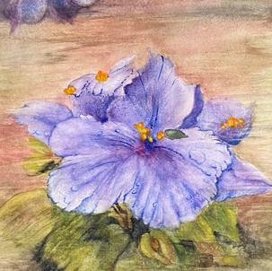"""""""Wild Violets"""""""