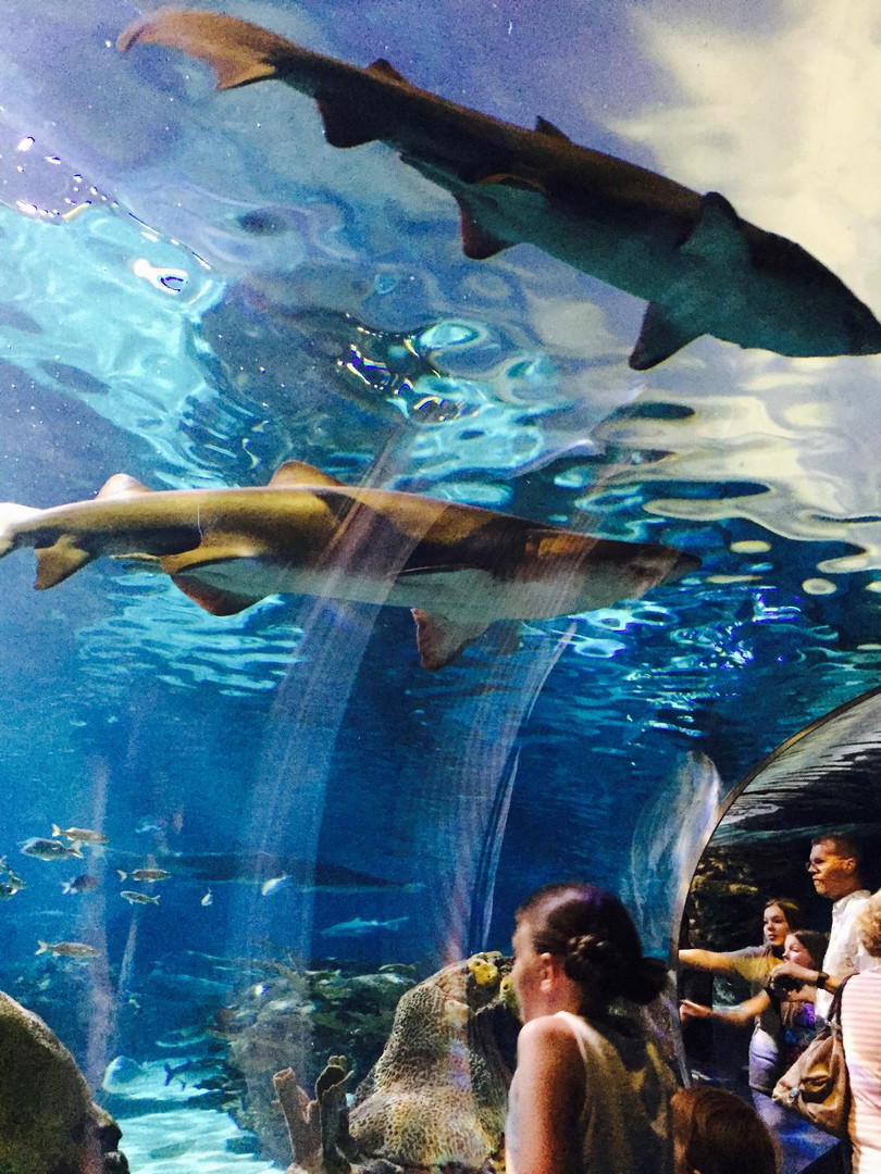Ripley's Aquarium of Gatlinburg