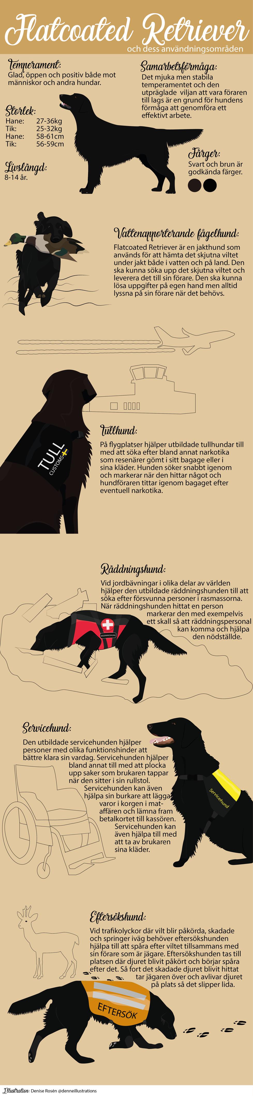 Flatcoated Retriever Infografik