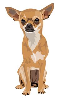 Chihuahua.png
