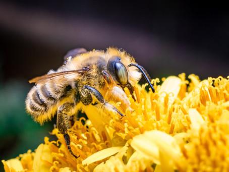 Sweet Spotlight: The Worker Bee