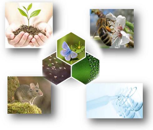 Mosaïque d'images représentant la nature : fleur, insecte, eau, terre, rongeur