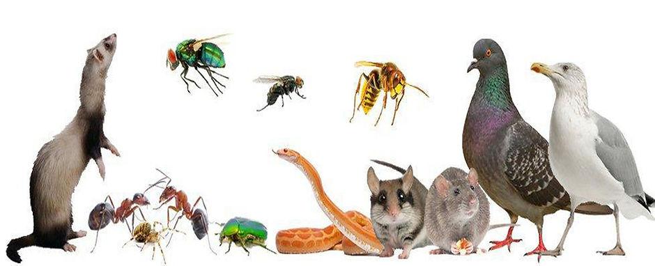 Ensemble d'animaux, rongeurs et insectes nuisibles : rat, souris, pigeon, guêpe, frelon, fourmi, mite, punaise, puce, blatte, cafard