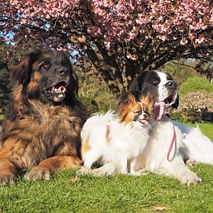 Unsere Hunde im Alltag