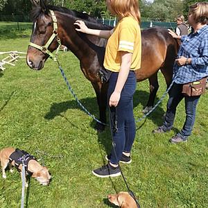 Pferdische Unterstützung