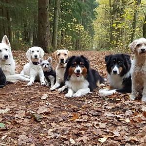 Spass und Training im Wald