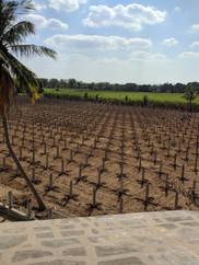 Veerbaug farm (2)-min.jpg