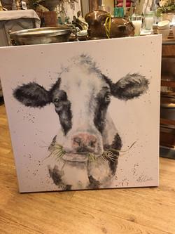 Kuh | Habe die Ehre