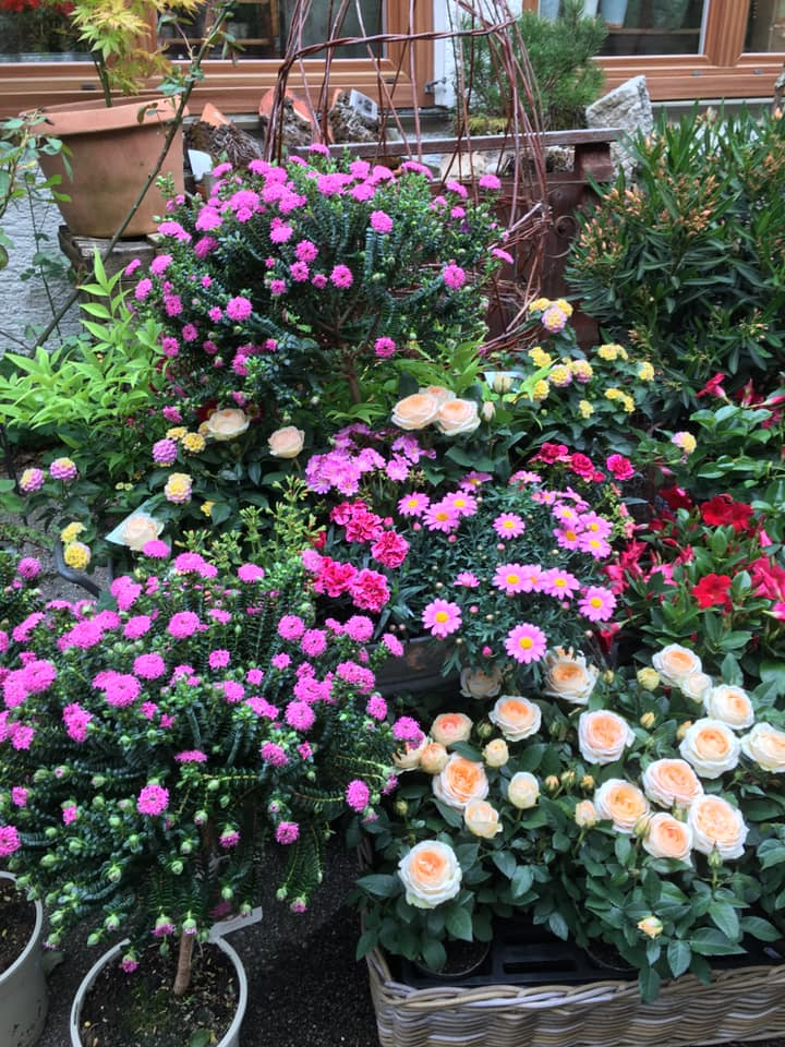 Blumen Ruhpolding