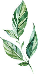 MajesticGreen-floralelements-02.png